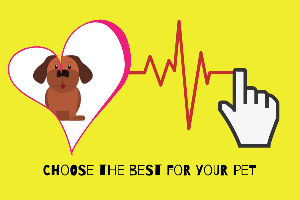 Learn about the best tips and tricks of pet care.