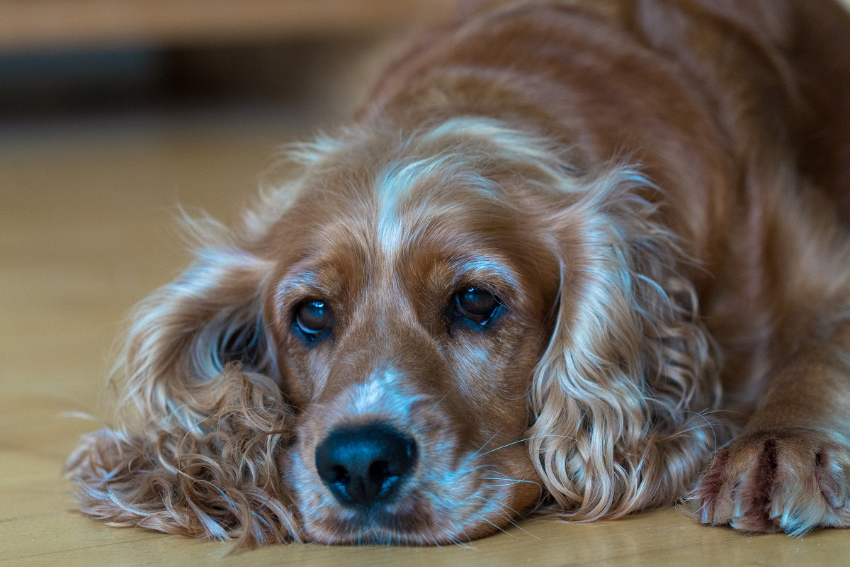 Is Your Dog Sick? Here Are 6 Signs For The Lead